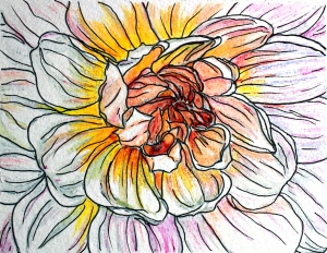 dahlia illustration 2 sc IMG_6136
