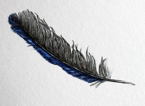 feather illustration 2 Isc