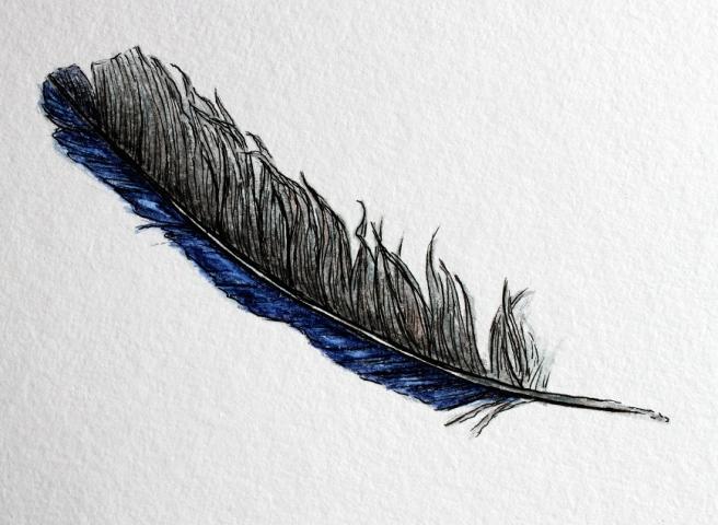 feather illustration 2 Isc