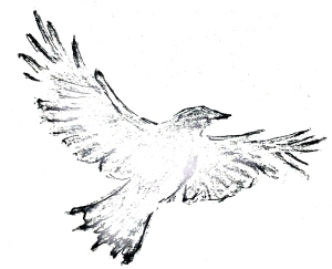 crow 2 IMG_6442