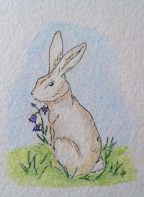 rabbit watercolor sc
