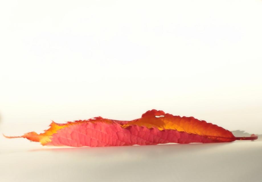 flaming-leaf_sm_hppi