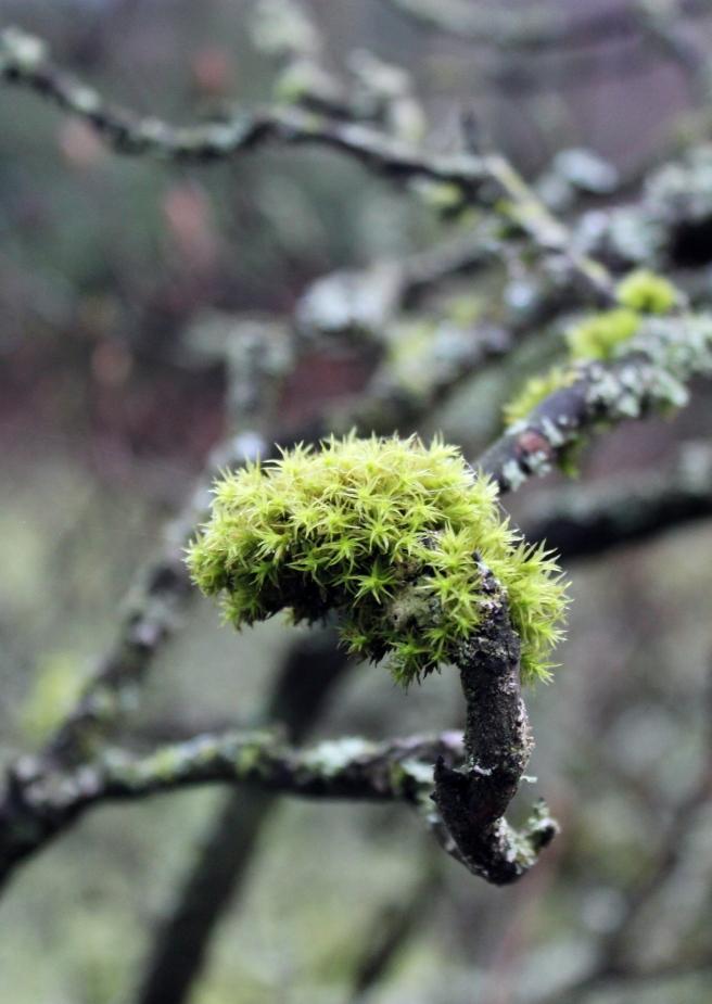 lichen-img_5396