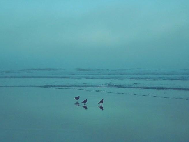 shi shi early morning
