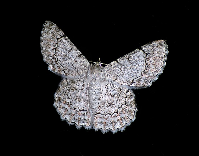 moth-425088_640